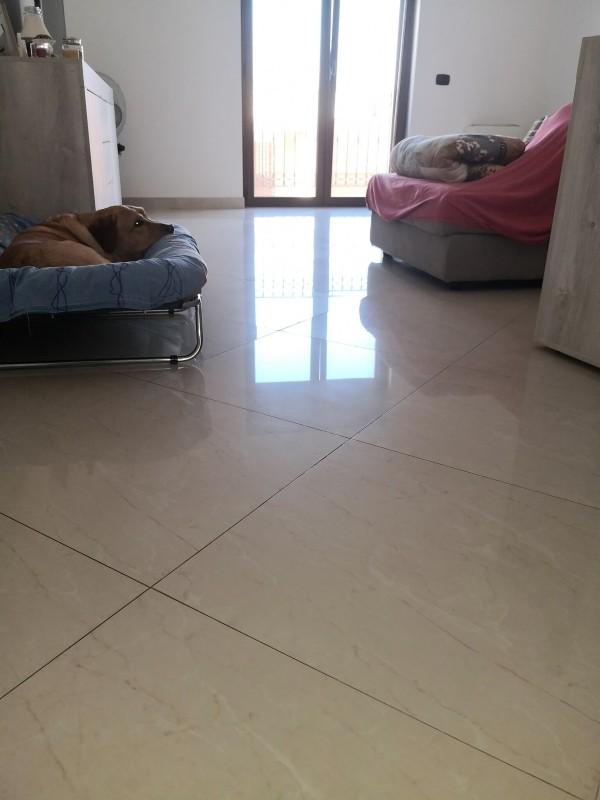 orina-perro